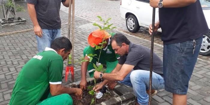 Prefeitura inicia serviço de arborização com plantio de mudas em área urbana