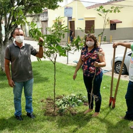 Meio Ambiente realiza plantio de mudas de Pau-Brasil em locais públicos